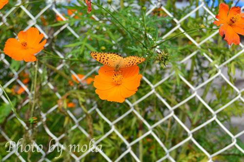 食事中の蝶
