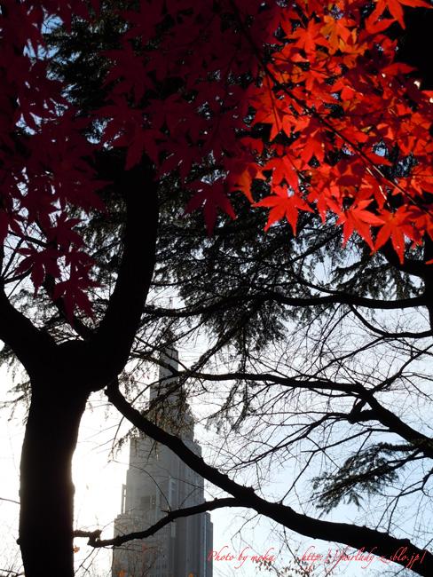 紅葉の光と影