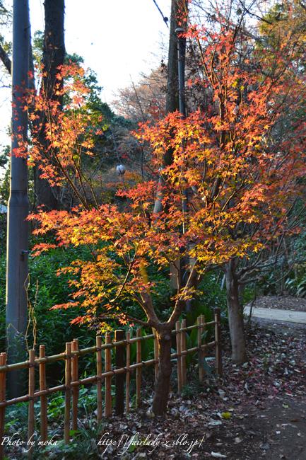 夕日に染まる紅葉