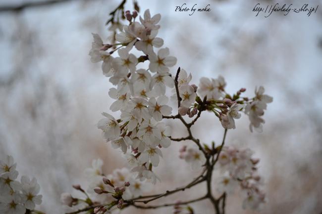 2011_asukayama12.jpg