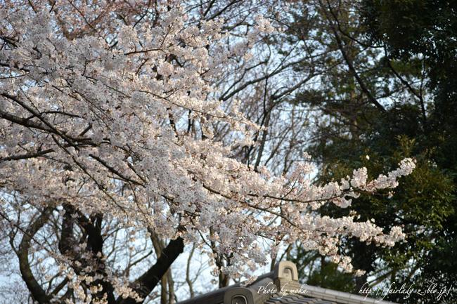 花見の季節